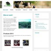 Website pentru firma VITAFRUCT RIBES SRL