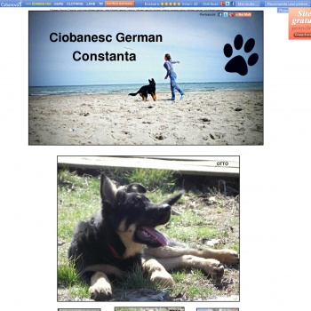 Ciobanesc German Constanta