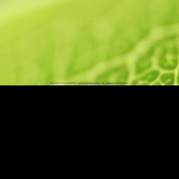 Website pentru firma Solid Net Media srl