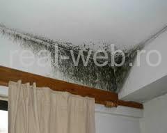 mucegai perete igrasie pe pereti vor fi amintire
